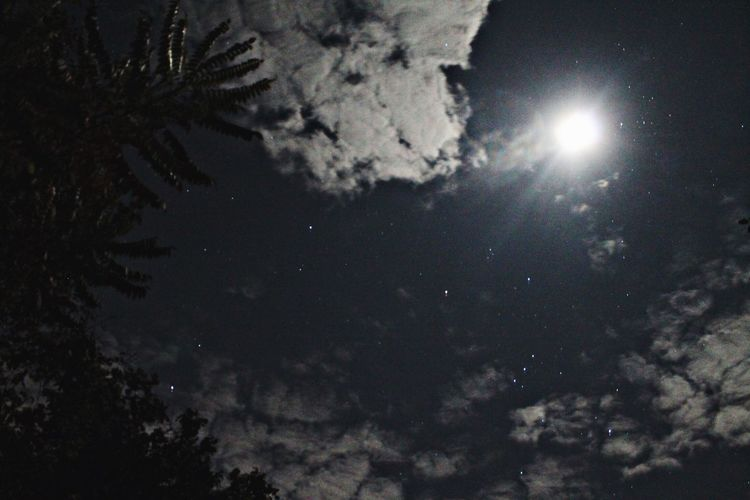 Nature Beauty In Nature Low Angle View Sky Night Scenics Tranquility EyeEmNewHere