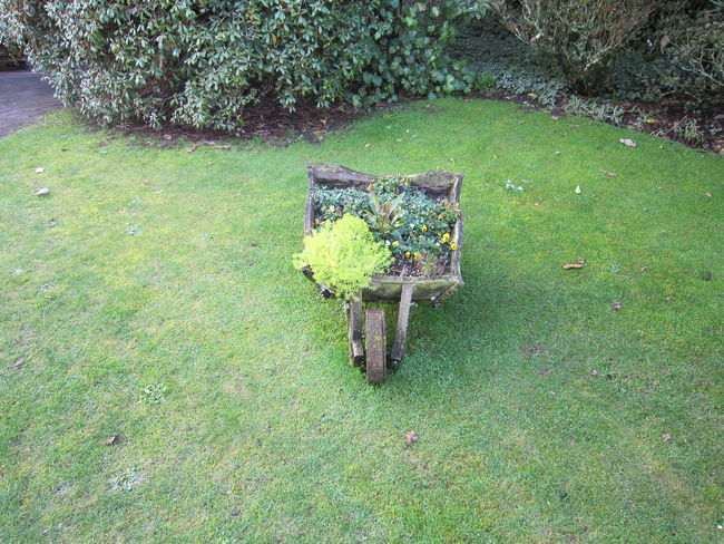EyeEmNewHere Grass Grass Photography Absence Day Field Front Or Back Yard Grass Green Color Growth High Angle View Land Lawn Moss Nature No People Outdoors Park Park - Man Made Space Plant Seat Street Streetphotography Tranquility Tree