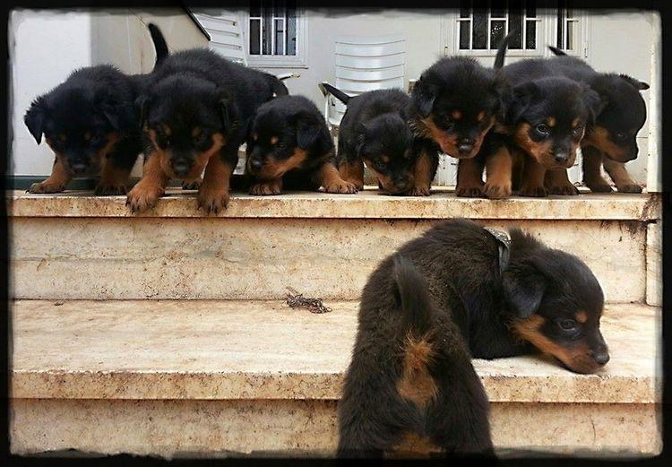 Stairways - The
