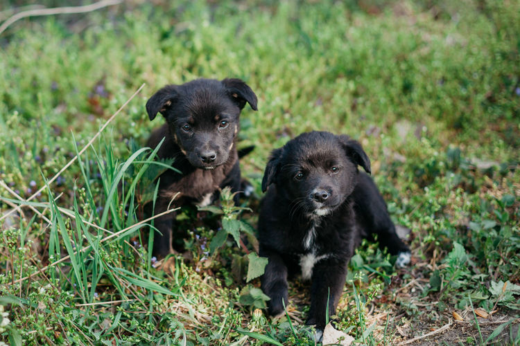Little puppies on the grass.