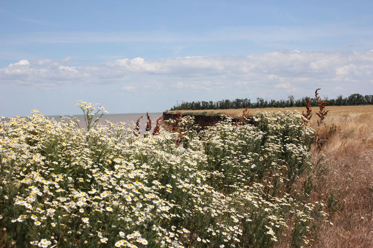 Sea of Azov. Cape of Love. Primorsko-Akhtarsk. Plant Beauty In Nature Growth Sky Land Nature Day Flower Cloud - Sky Field Scenics - Nature Flowering Plant Environment Tranquility Tranquil Scene Tree Landscape Non-urban Scene Outdoors No People Azov Of Sea Sea Cape Of Love Summer Travel