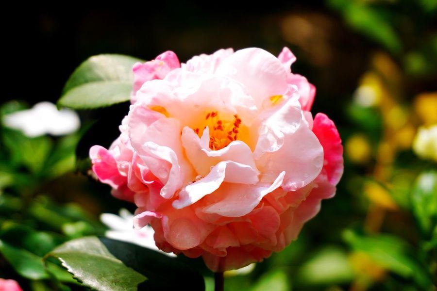 Flower EyeEmNewHere Millennial Pink