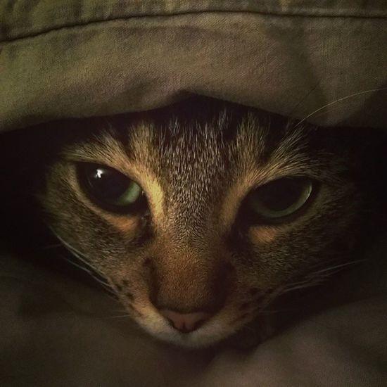 Baby love... Cat Instacat Gabin Love