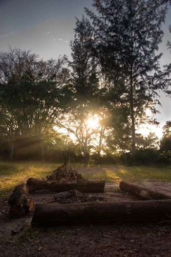 What A Beauty In Nature ! Nature Sky And Greenyatmosphere Tree Trunk Tree Tranquility Tranquil Scene Countryside Scenics Branch Growth Non-urban Scene Solitude Sunbeam Outdoors Park Footpath Sun Remote Bright