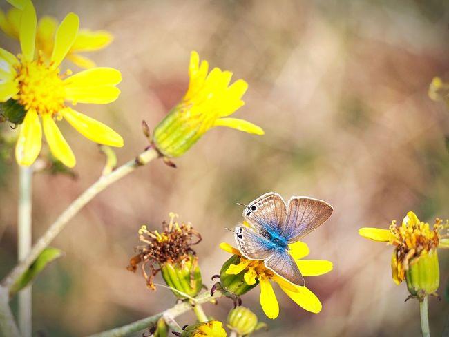 優しい夢を… 蝶々 Butterfly Collection Butterfly - Insect Butterfly On Flower Insect Insect Photography Insects Collection Beauty In Nature EyeEm Nature Lover EyeEm Best Shots EyeEm Gallery Eyemphotography EyeEm Best Shots - Nature