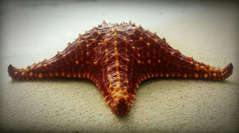 Starfish  Life Is A Beach Beachphotography Island Islandlife Beach