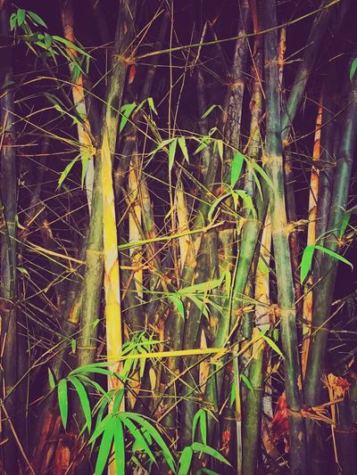 Growth Nature Outdoors Green Color No People Forest Tree Day Tree Trunk Plant Beauty In Nature Branch Close-up Plants 🌱 Plants And Flowers Garden City Plants Little Plants🌿 Plants Bamboo - Plant Bamboo Grove Bamboo Forest
