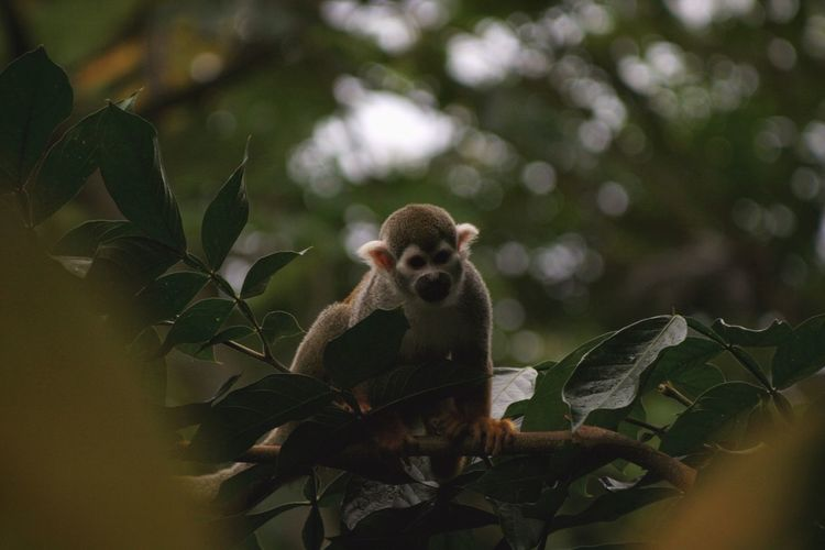 Close-up of a monkey on tree