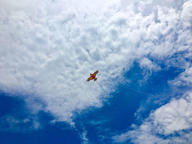 放飞梦想. IPhoneography Freedom Birds Kite Cloud GZ Blue Sky Dream