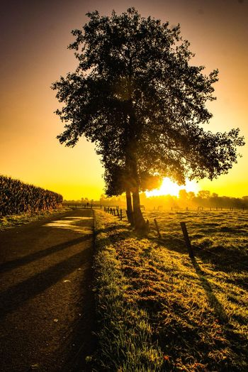In Thoughts With You Genießen Beautiful Scenery Beautiful Morning Early Morning Scenics Scenery Abschalten Gold Colored The Way Forward The Week on EyeEm Tree Sunset Sunlight Shadow Pixelated Sky Landscape Single Tree Shining Silhouette Sun Calm Tranquil Scene Tranquility Idyllic Sunrise Sunbeam
