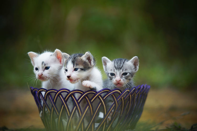 Close-up of kittens in container on land
