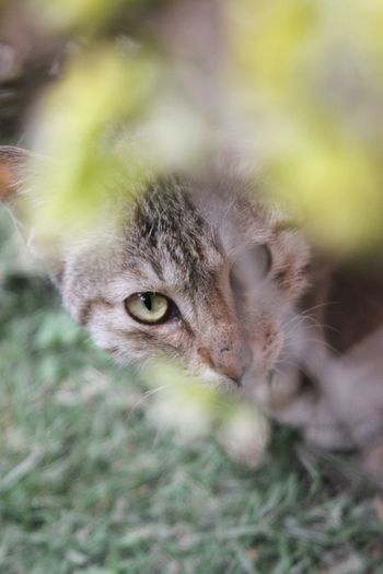 EyeEmNewHere One Animal Portrait Eye Feline Animal Domestic Cat Looking At Camera Domestic Animals