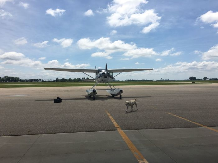 Labrador retriever walking by seaplane on runway at airport against cloudy sky