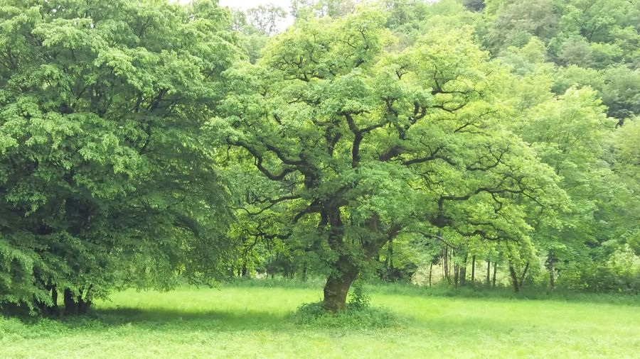 Green Color Nature Tree Grass Beauty In Nature Outdoors Bouillon België