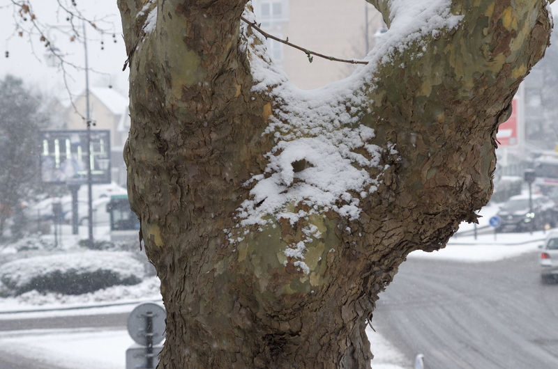 Close-up of frozen tree trunk during winter