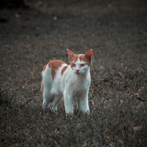Cat looking away on field