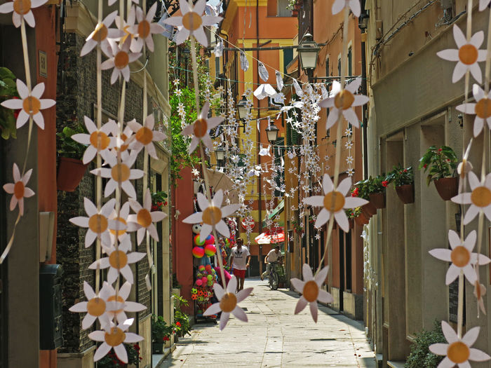 Alassio Liguria Daisies Daisies ♥  Architecture Building Exterior Celebration Close-up Daisies Flowers Day Decoration Festadeicolori Flower Hanging Holiday Outdoors Paper Village Village Life Village View White Color White Flower White Flowers
