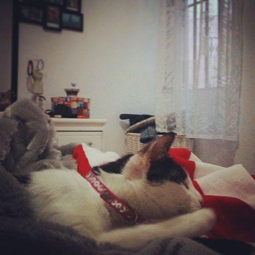 Alguien no se quiere Despertar.! Cats Instagram Iphonesia Testagram Sweet