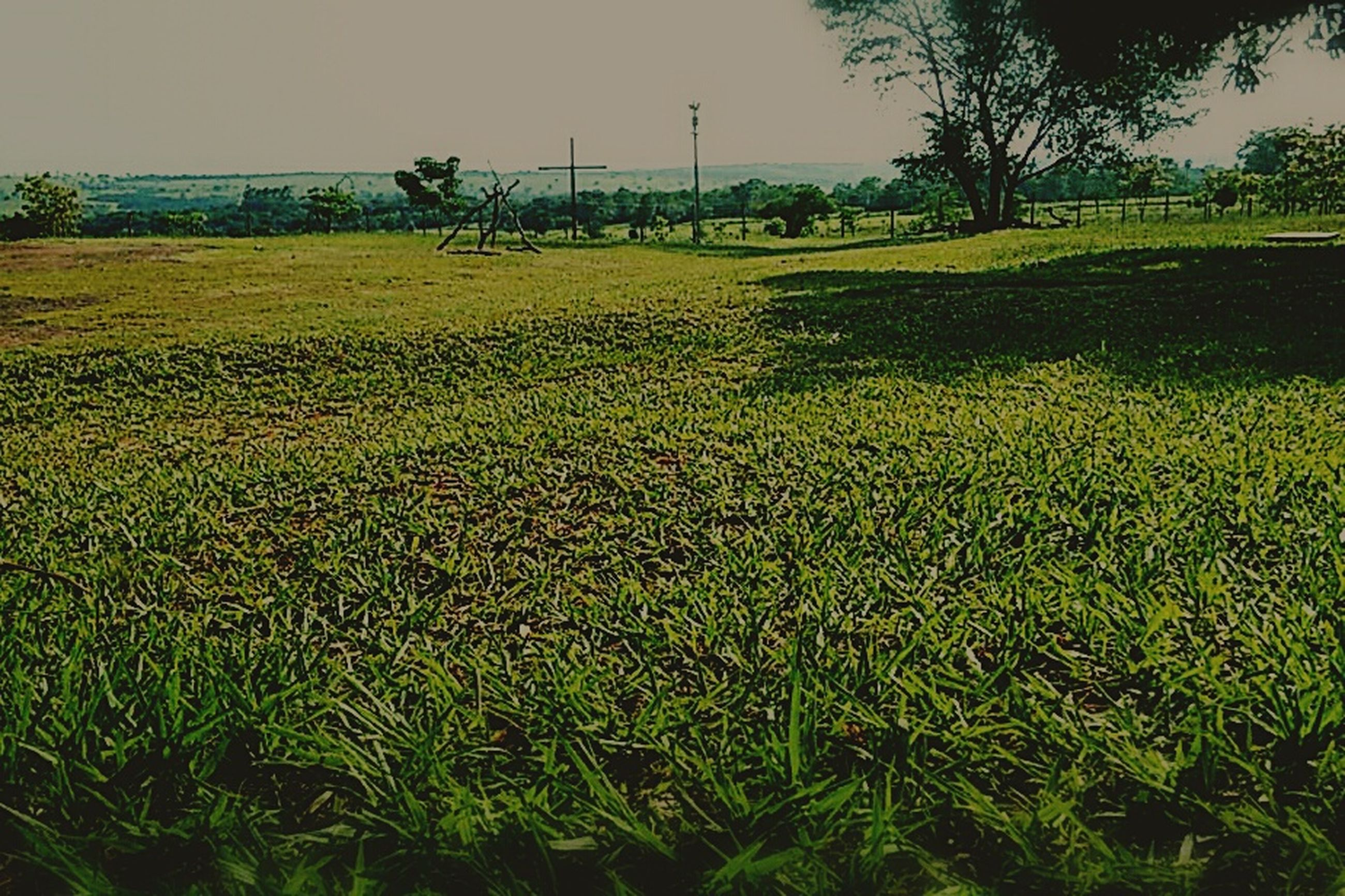 grass, field, growth, beauty in nature, tranquil scene, tranquility, nature, green color, scenics, flower, landscape, grassy, plant, yellow, sky, tree, rural scene, idyllic, outdoors, clear sky