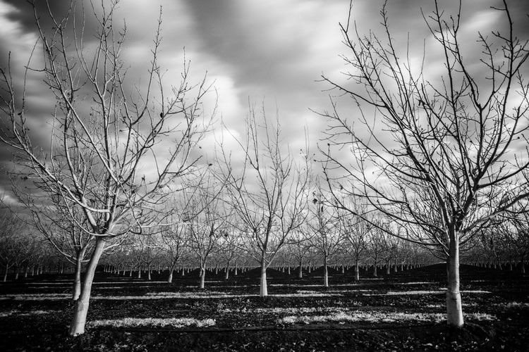 Bare trees on landscape against sky