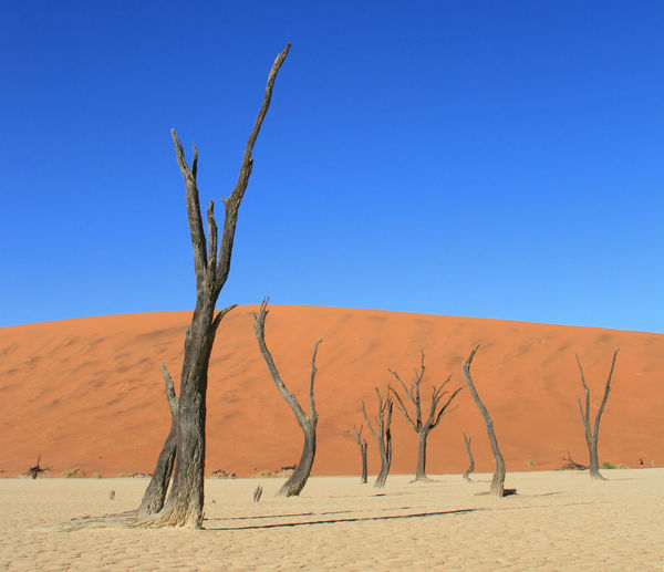 Africa Arid Climate Bare Tree Beauty In Nature Blue Branch Clear Sky Dead Plant Dead Tree Deadvlei Desert Extreme Terrain Landscape Namibia Nature Non-urban Scene Remote Sand Sand Dune Scenics Solitude Tranquil Scene Tranquility Travel Destinations Tree