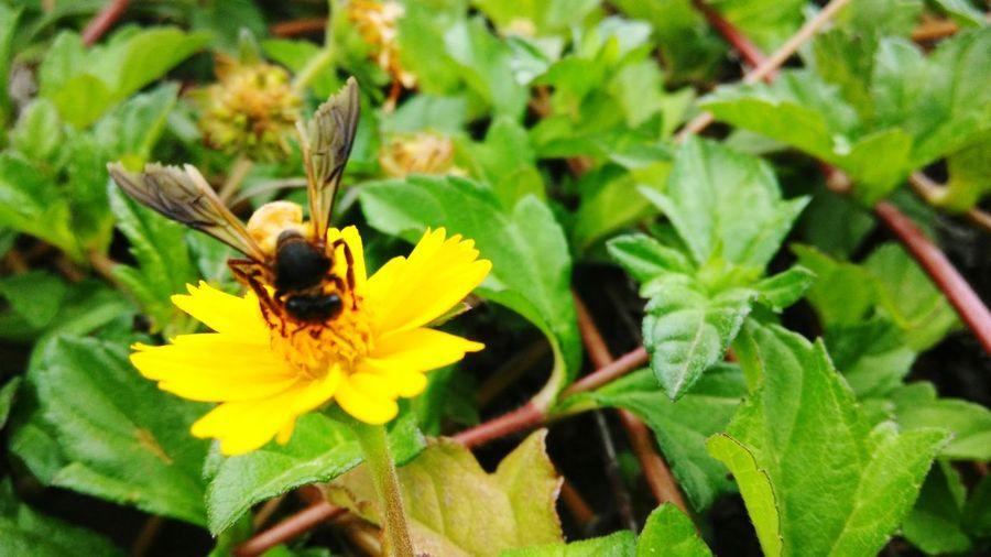 Last day of industrial Training! Mycollege Nature Truecolors EyeEm Nature Lover Bee 🐝 Poser ❤ Flaunt Eye4photography  EyeEm Gallery Eye Em Nature Lover