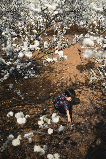 Cute baby boy playing in plum blossoms garden