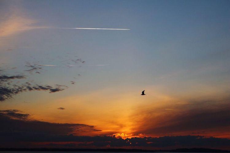 Oh I love this place Sunset Relaxing Enjoying The Sun Sunshine Wonderful Sky Outdoors Nature Landscape Mothernature Bird Birdybirdy