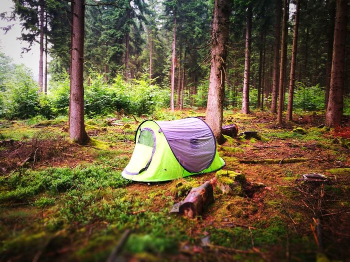 Nature Beauty In Nature Beautiful ♥ Beautiful Forest Forest Photography Forest Life Camping Camping Life Campinglife Camping Trip Wald Zelt HuaweiP9plus Huawei P9 Leica HuaweiP9 Huawei P9 Plus Huawei Shots Huawei Photography Huaweiphotography Huawei P9 Photos Лес лес и природа палатка Кемпинг