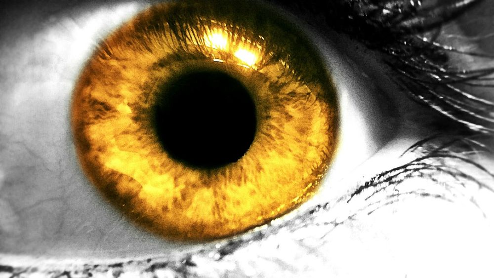 Macro Macro Photography Macro Eye Eye Bright Yellow Eye Gold 43 Golden Moments