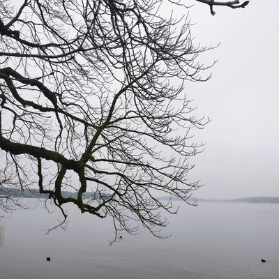 Silhouette Water Beauty In Nature Branch Landscape Lake Outdoors No People Day Tree