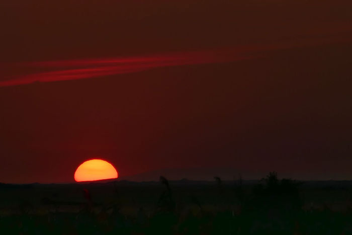 Travel Destinations Puszta Hungary Landscape EyeEm Best Shots Beauty In Nature Taking Photos First Eyeem Photo Sunset Orange Color Vacations Silhouette Sun Sky Tranquil Scene Nature Outdoors