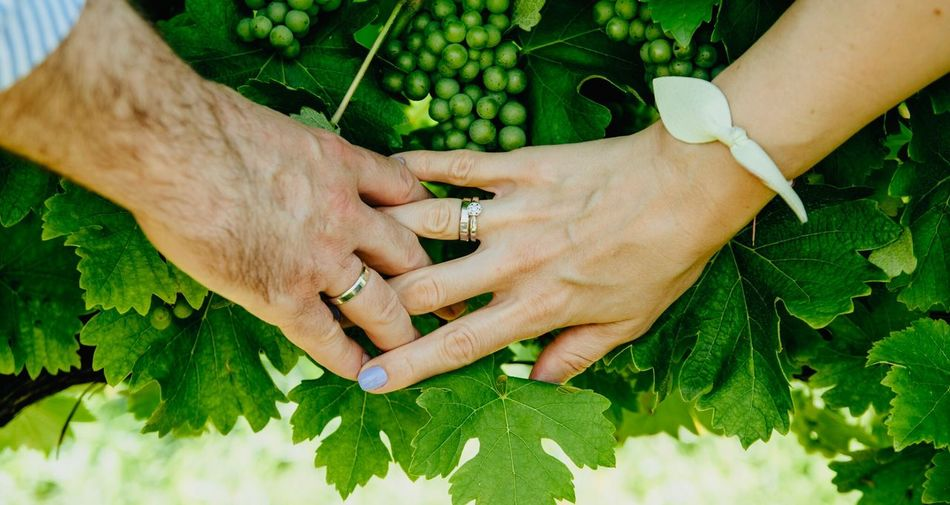 Loving hands Rings Love Holding Green Color Women Men Food Couple - Relationship Nature Freshness People Togetherness Fruit EyeEmNewHere