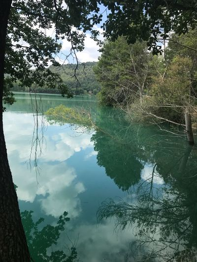Water Reflection Tree Plant Lake Tranquility Nature Tranquil Scene Beauty In Nature Growth Cloud - Sky No People