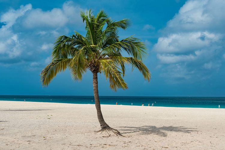 Travel Arid Climate Beach Beauty In Nature Caribbean Cloud - Sky Day Dutch Growth Horizon Over Water Idyllic Island Leisure Nature No People Outdoors Palm Tree Paradise Resort Sand Scenics Sea Sky South America Summer Tranquil Scene Tranquility Travel Destinations Tree Tropical Water