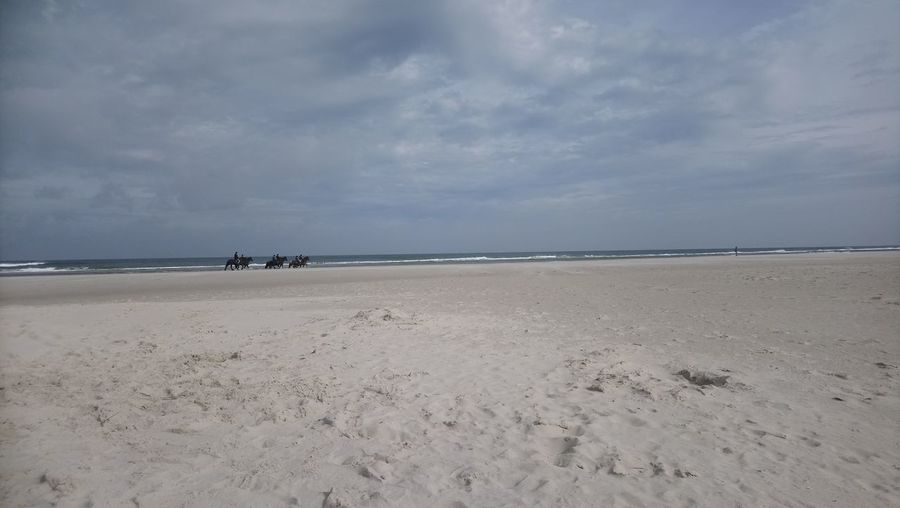 Terschelling Horses Water Sea Beach Sand Blue Low Tide Swimming Summer Sky Horizon Over Water Coastal Feature Seascape Coastline Coast Dramatic Sky Shore Tide Wave