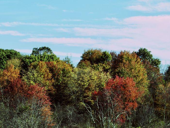 An Autumn Sky