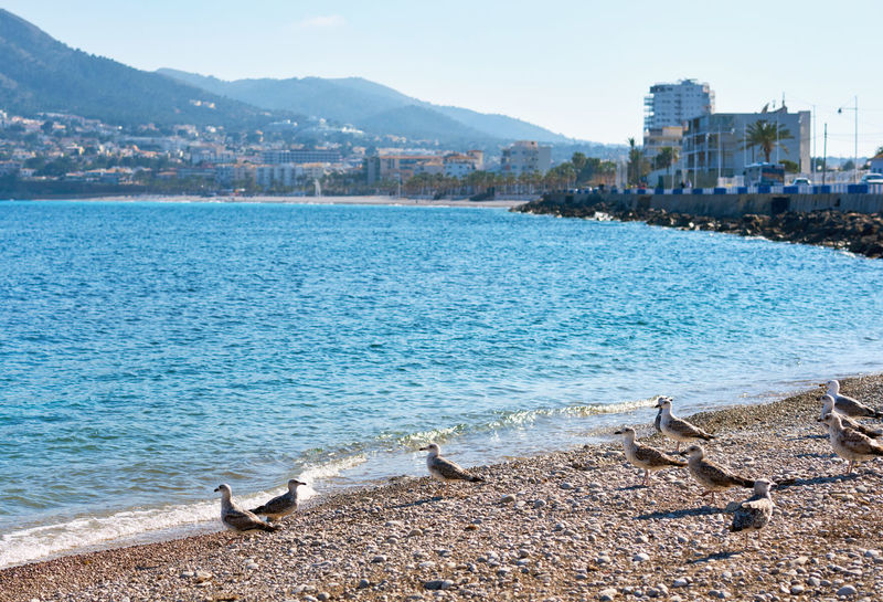 Seagulls on the pebble beach of Altea. Altea is the most beautiful place in the Costa Blanca. Spain Alicante Province Spain Altea, Spain Bay Beach Beauty In Nature Birds Blue Sky Costa Blanca Landscape Mediterranean Sea Mountain No People Pebble Beach Scenery Sea Seagulls Seashore Seaside SPAIN Sunny Day Tourist Resort Town Travel Destinations Tropical Climate Waterfront