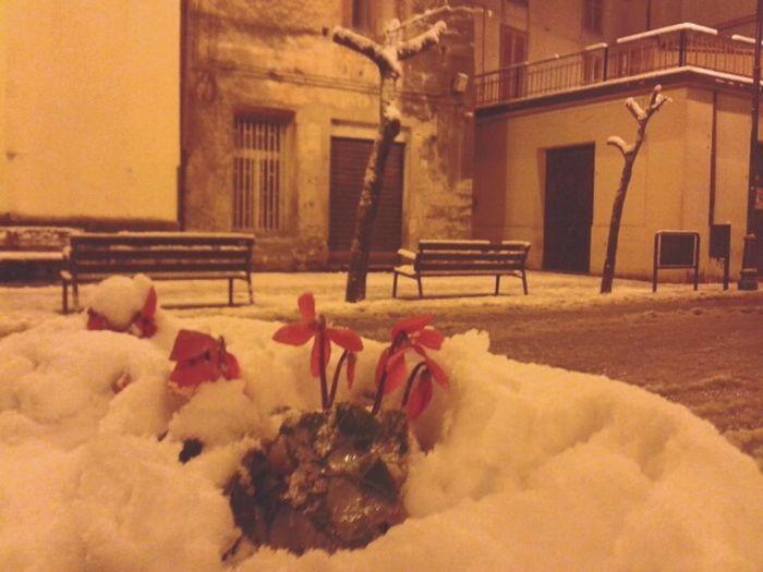 Enjoying Life Snow ❄ Urban Architecture Urban Landscape Winter Whydoiloveyouthatmuch
