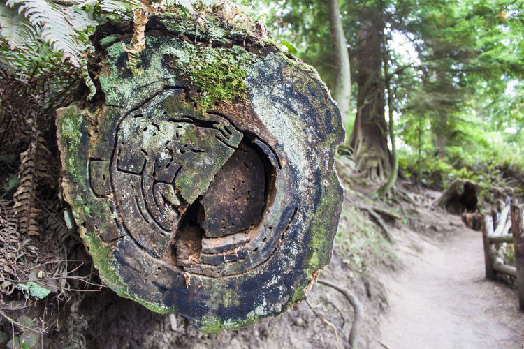 Tree Plant Forest Day Nature No People Tree Trunk Trunk Circle WoodLand Geometric Shape Shape Focus On Foreground