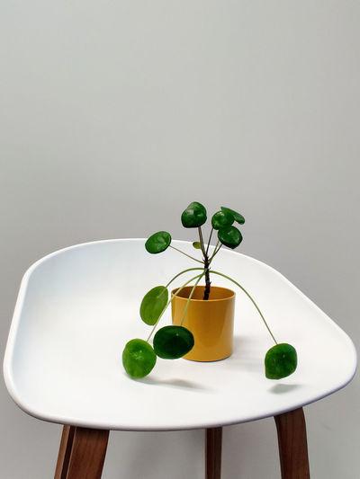 plantpedestal