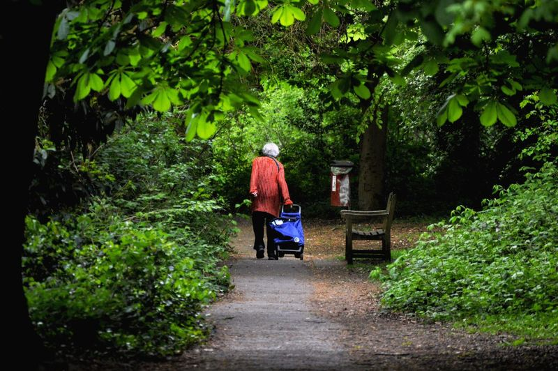 Rear View Of Woman With Baby Carriage Walking Amidst Trees