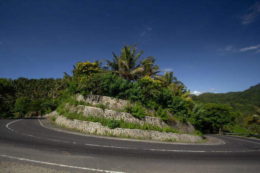 Tree Winding Road Road Mountain Curve Palm Tree Sky Landscape Plant