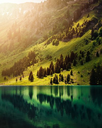 Scenic view of lake by trees on mountain
