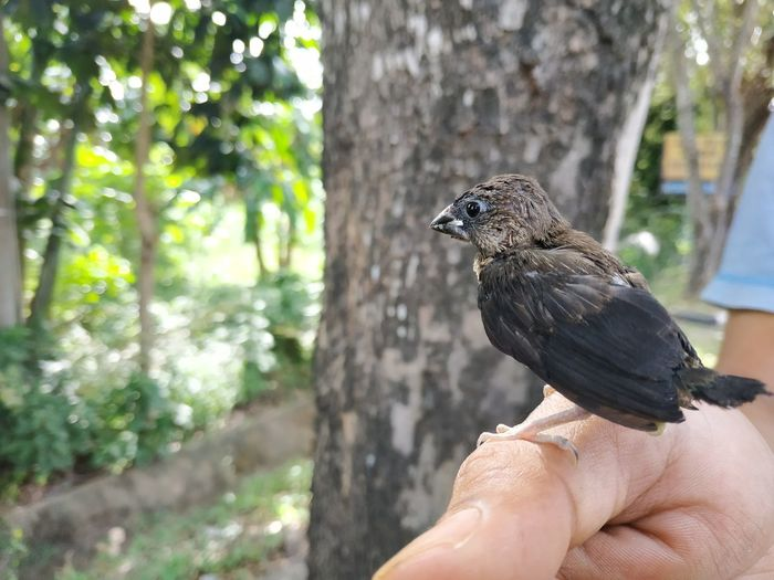 Close-up of bird perching on hand against tree trunk