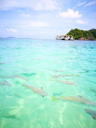 Sea And Sky Sea Beach Vacations Island Fish MarinePark Redang Island Pulau Redang