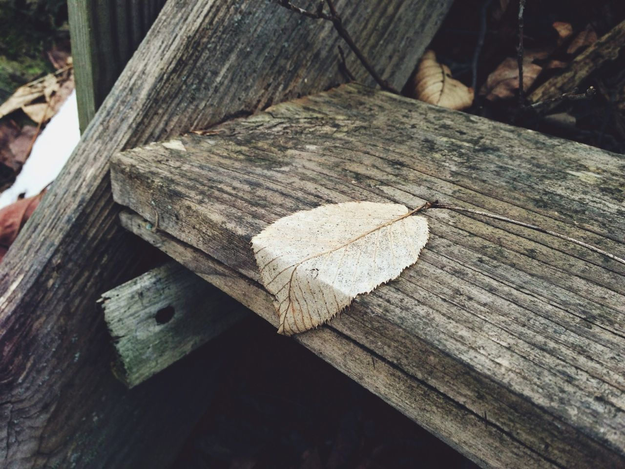 Close-up of a leaf on wooden stair