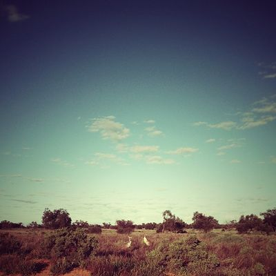 Turns out there's no internet in the desert. But there are a lot of kangaroos. Here are two. #roadtrip Roadtrip Lachlanpayneawesomeamazingphotosbestinstagramereverfollowmenow Payneroadtrip