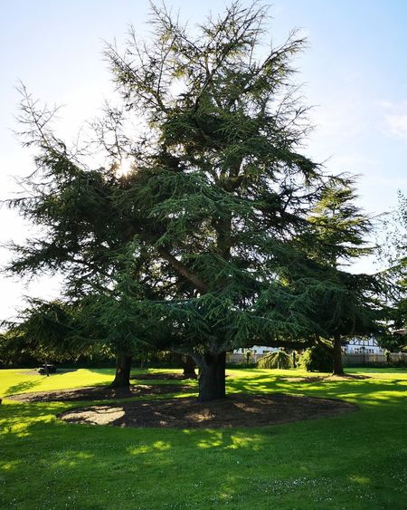 """""""A tree with strong roots laughs at the storms"""" - Malay Proverb Stormont Estate Discovernorthernireland Belfast Dundonald Nationaltrust Park - Man Made Space Grassland Countryside Greenery"""
