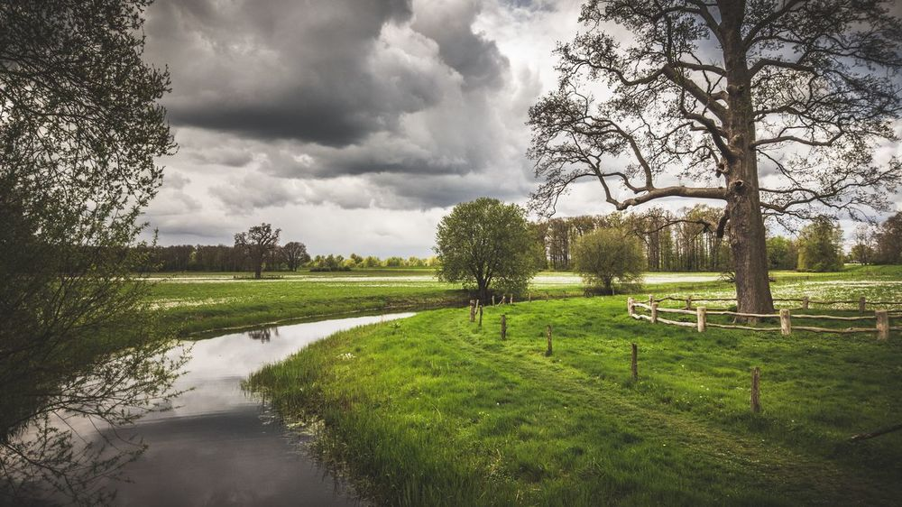Cloudy sky with dutch landscape Cloud - Sky Growth Tree Nature Green Color Beauty In Nature Grass Day No People Water Outdoors Sky Landscape EyeEm Magazine
